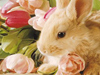 Adorable April Calendar  -- Free Cute Holiday Animal, Desktop Wallpapers from American Greetings