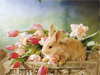 Bunny in a Basket  -- Free Cute March, Desktop Wallpapers from American Greetings