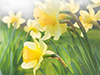 Field of Flowers  -- Free Traditional Celebrate Spring, Desktop Wallpapers from American Greetings