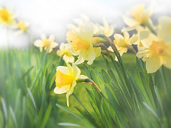 free wallpaper screen savers free spring screensavers and wallpaper
