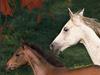Horseplay  -- Free Traditional Animal, Desktop Wallpapers from American Greetings