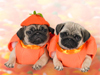 October Calendar  -- Free Dogs, Pets Desktop Wallpapers from American Greetings