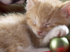 December Calendar  -- Free Cute Pets, Desktop Wallpapers from American Greetings