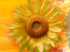 Sunflowers  -- Free Traditional Celebrate Fall, Desktop Wallpapers from American Greetings