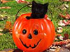 Cat-o-lantern  -- Free Cute Halloween,Cute  Holiday Desktop Wallpapers from American Greetings