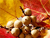 Autumn Crafts  -- Free Traditional Celebrate Fall, Desktop Wallpapers from American Greetings