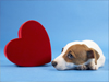 February Calendar  -- Free Dogs Calendar, Pets Calendar Desktop Wallpapers from American Greetings