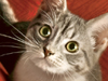 Couch Kitty  -- Free Cats, Pets Desktop Wallpapers from American Greetings