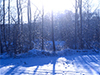 Winter Dawn  -- Free Just Because Nature, Desktop Wallpapers from American Greetings
