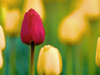 Blooming March Calendar  -- Free Calendar Nature, Desktop Wallpapers from American Greetings