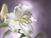 Easter Inspiration  -- Free Religious Holiday Flower,Religious Holiday  Nature Desktop Wallpapers from American Greetings