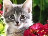 Kitty Garden  -- Free Cute Pets Flower,Cute Pets  Nature Desktop Wallpapers from American Greetings