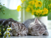 April Catnap  -- Free Cute Pets Calendar Flower,Cute Pets Calendar  Nature Desktop Wallpapers from American Greetings