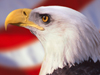 American Pride  -- Free Traditional Holiday Animal, Desktop Wallpapers from American Greetings