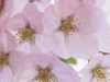May Beauty Calendar  -- Free Calendar Nature, Desktop Wallpapers from American Greetings