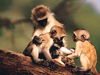 The Family Tree  -- Free Monkey, Animal Desktop Wallpapers from American Greetings