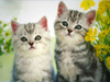 June Calendar  -- Free Cute Pets, Desktop Wallpapers from American Greetings
