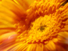 Sunlit Daisy  -- Free Traditional Celebrate the Season Flower,Traditional Celebrate the Season  Nature Desktop Wallpapers from American Greetings