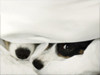 True Love Nose  -- Free Cute Pets Just Because Animal, Desktop Wallpapers from American Greetings