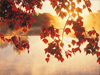 Autumn Leaves  -- Free Just Because, Desktop Wallpapers from American Greetings