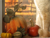 Autumn Cat  -- Free Holiday Animal, Desktop Wallpapers from American Greetings