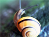 A Snail's Pace  -- Free Just Because Animal, Desktop Wallpapers from American Greetings