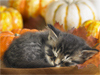November Calendar  -- Free Calendar, Desktop Wallpapers from American Greetings