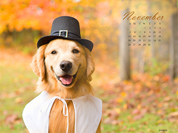 Autumn Pooch Wallpapers