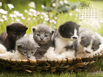 Spring Kitties Wallpapers