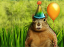 Birthday Nut<br>Talking Card Birthday eCards
