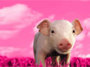Hogs and Kisses<br>Talking Card Valentine's Day eCards