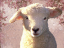 Love Ewe!<br>Talking Card Easter eCards