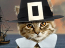 Kitty Pilgrim<br>Talking Card Thanksgiving eCards