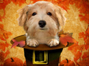 Pilgrim Pup<br>Talking Card Thanksgiving eCards