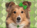 Fine Irish Lassie<br>Talking Card St. Patrick's Day eCards