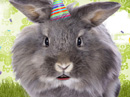Another Gray Hare<br>Talking Card Birthday eCards