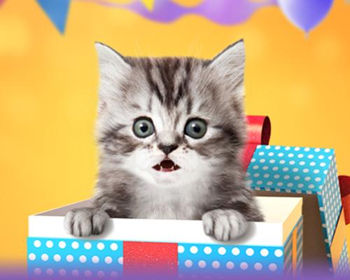 talking kitten birthday banner