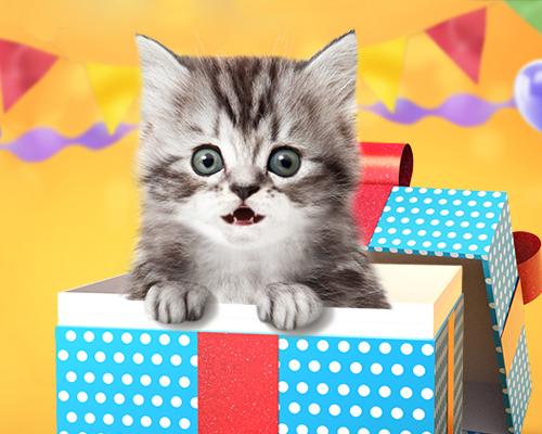 talking kitten birthday card