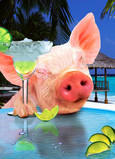 Pig Margarita 5x7 Folded Card