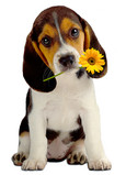 Daisy Puppy 5x7 Folded Card