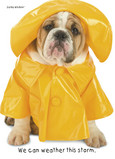 Raincoat Bulldog 5x7 Folded Card