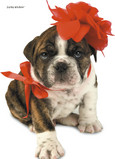 Red Bow Puppy 5x7 Folded Card