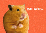 Do Not Worry Hamster 7x5 Folded Card
