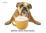 Bulldog Latte 7x5 Folded Card