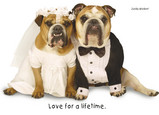 Married Bulldogs 7x5 Folded Card