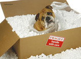 Boxed-In Bulldog 7x5 Folded Card