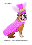 Easter Bonnet Bulldog 5x7 Folded Card