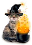 Photo Kitty with Magic Cauldron 5x7 Folded Card