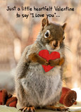 Squirrel with Heart 5x7 Folded Card