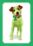 Shamrock Terrier 5x7 Folded Card